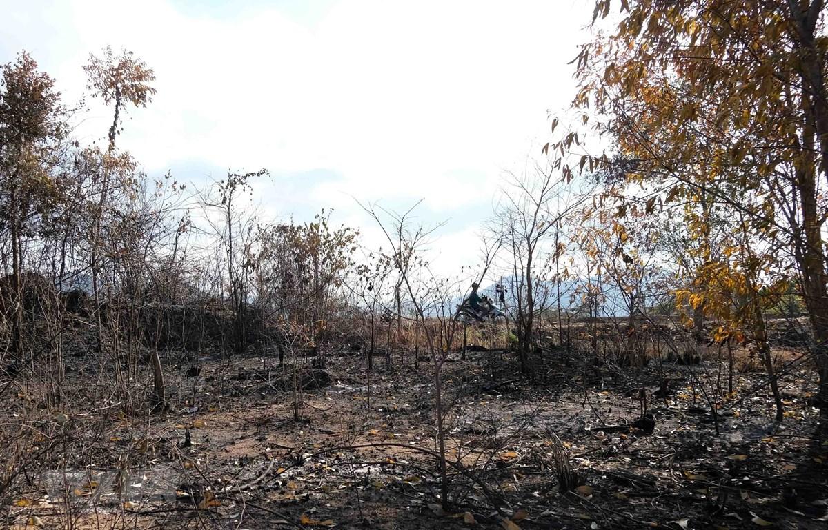 Nguy cơ cháy rừng cao trong thời tiết nắng nóng. (Ảnh: TTXVN)