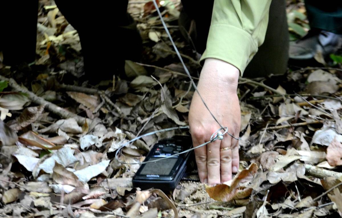 Loại bẫy dây rút có thể bắt được nhiều loại động vật khác nhau. (Ảnh: Quốc Dũng/TTXVN)