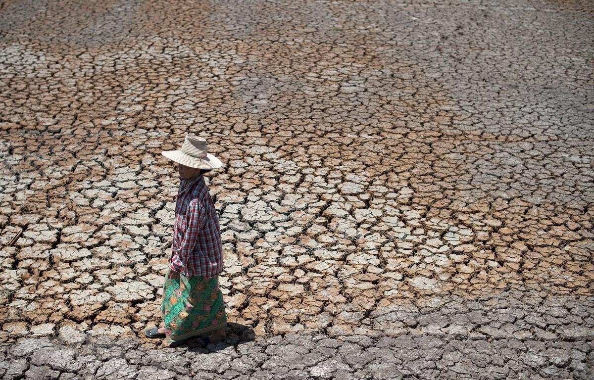 Cánh đồng lúa khô hạn tại tỉnh Suphanburi, Thái Lan. (Ảnh: AFP/TTXVN)