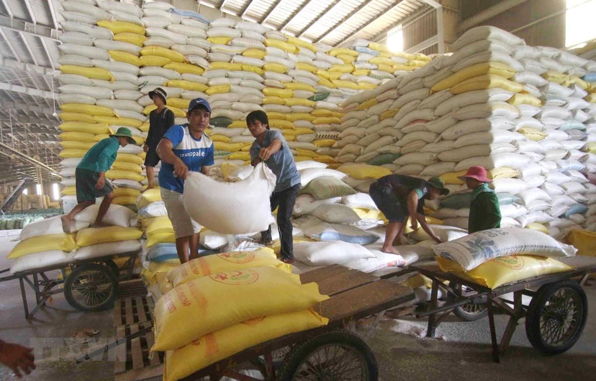 Chuẩn bị nguồn hàng gạo xuất khẩu tại Công ty Lương thực sông Hậu (Tổng công ty Lương thực miền Nam). (Ảnh: TTXVN)