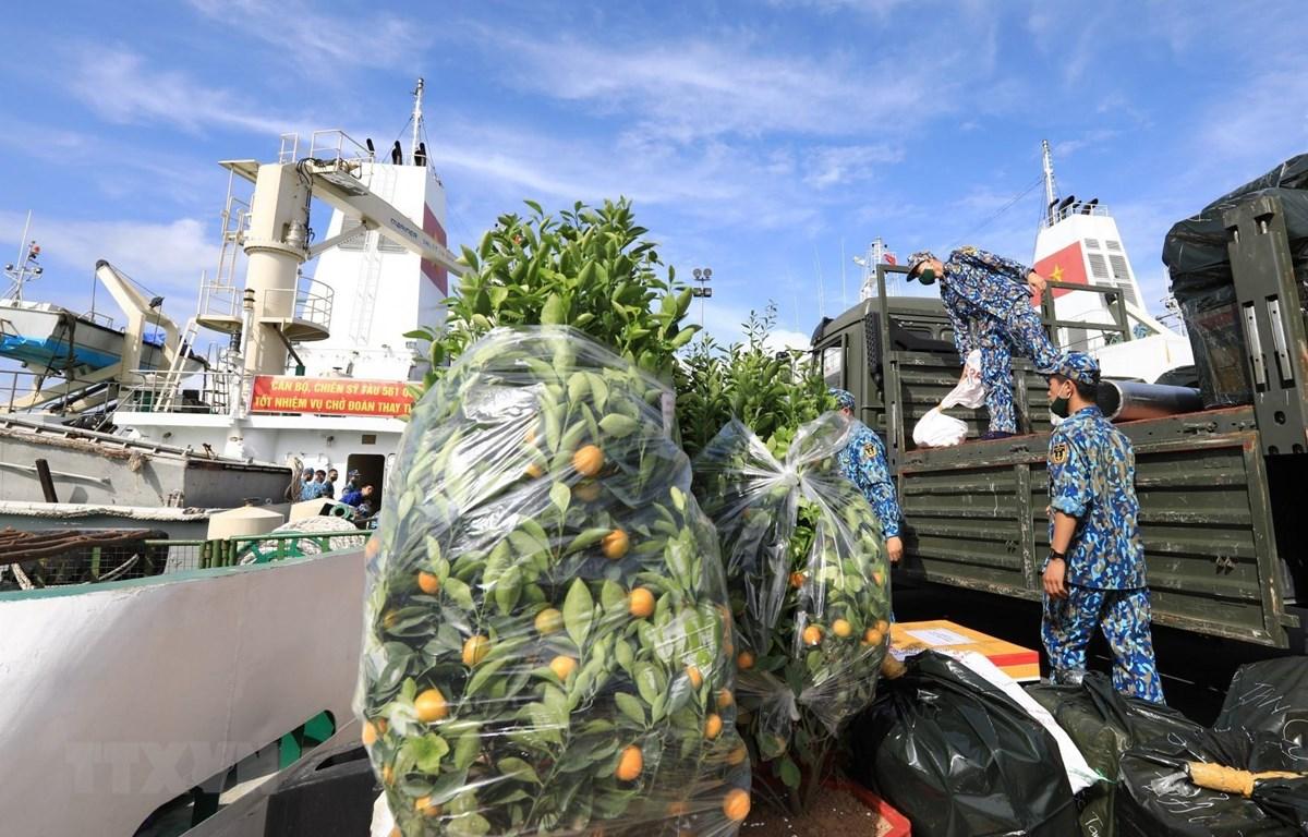 Những chậu quất cảnh là món quà Tết vô cùng ý nghĩa từ đất liền gửi đến quân và dân huyện đảo Trường Sa (Khánh Hòa). (Ảnh: Thành Đạt/TTXVN)