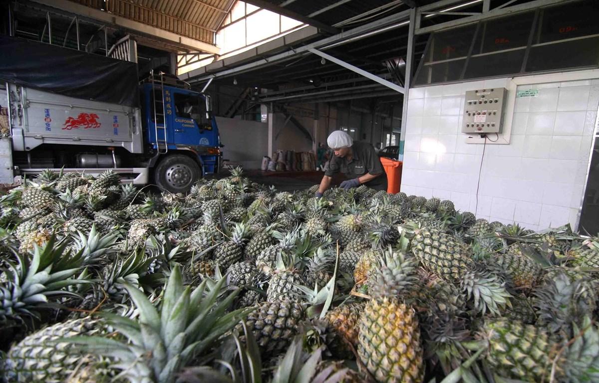 Sơ chế dứa nguyên liệu để đưa vào chế biến dứa đóng hộp xuất khẩu tại nhà máy của Công ty CP Xuất nhập khẩu Nông sản thực phẩm An Giang (tỉnh An Giang). (Ảnh: Vũ Sinh/TTXVN)