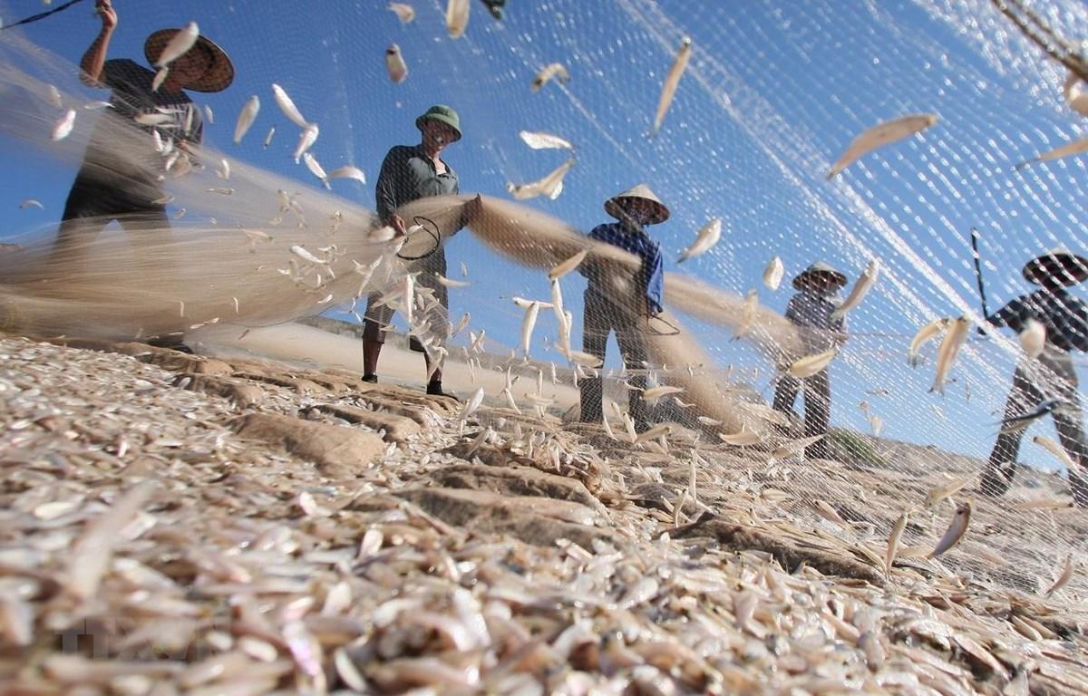 Ngư dân huyện Giao Thủy (Nam Định) thu hoạch cá. (Ảnh: Huy Hùng/TTXVN)