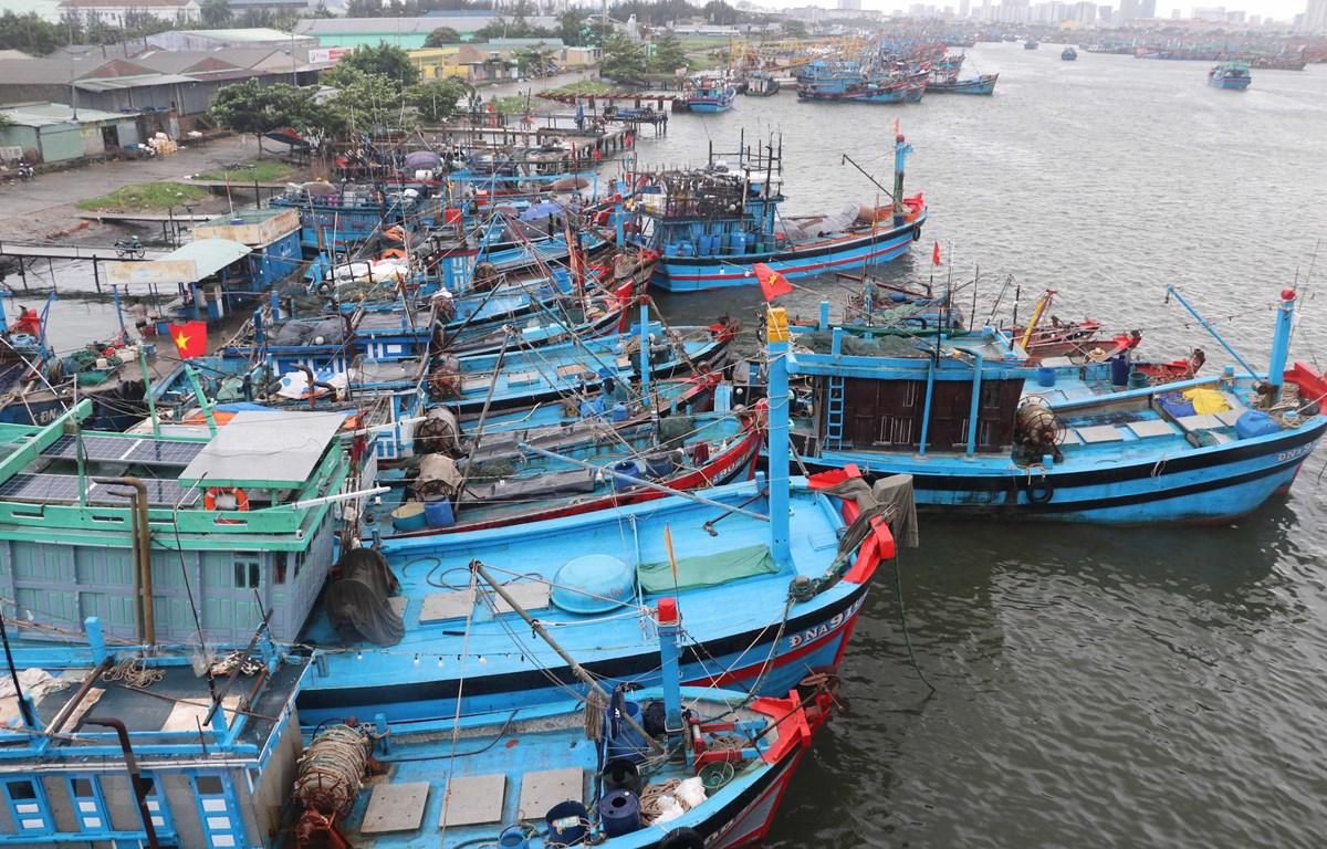 Tàu cá của ngư dân về neo đậu tránh bão số 5 tại Âu thuyền Thọ Quang. (Ảnh: Trần Lê Lâm/TTXVN)
