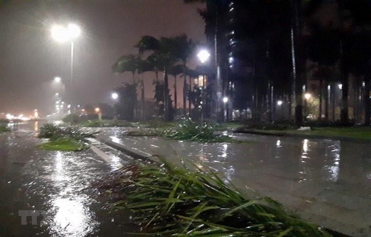Cây bị đổ gãy ở đường An Dương Vương, thành phố Quy Nhơn (Bình Định). (Ảnh: Nguyên Linh/TTXVN)
