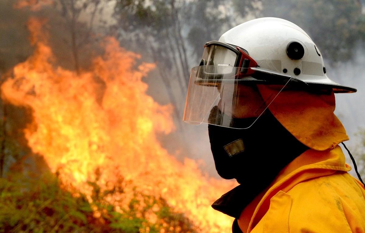 Cháy rừng ở Australia. (Nguồn: AAP)