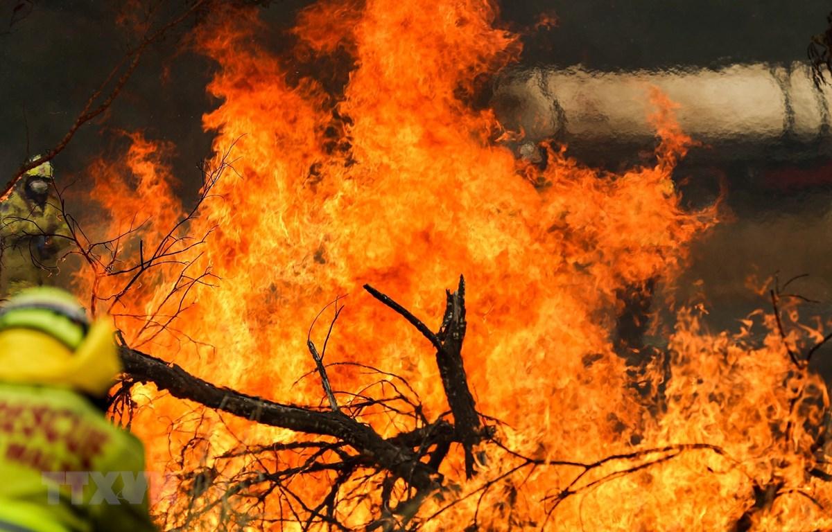 Hiện trường vụ cháy rừng tại Taree, New South Wales, Australia. Ảnh: THX/TTXVN)