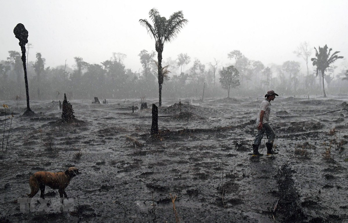 Một góc rừng Amazon ở gần Porto Velho, bang Rondonia, Brazil bị tàn phá do hỏa hoạn. (Ảnh: AFP/TTXVN)