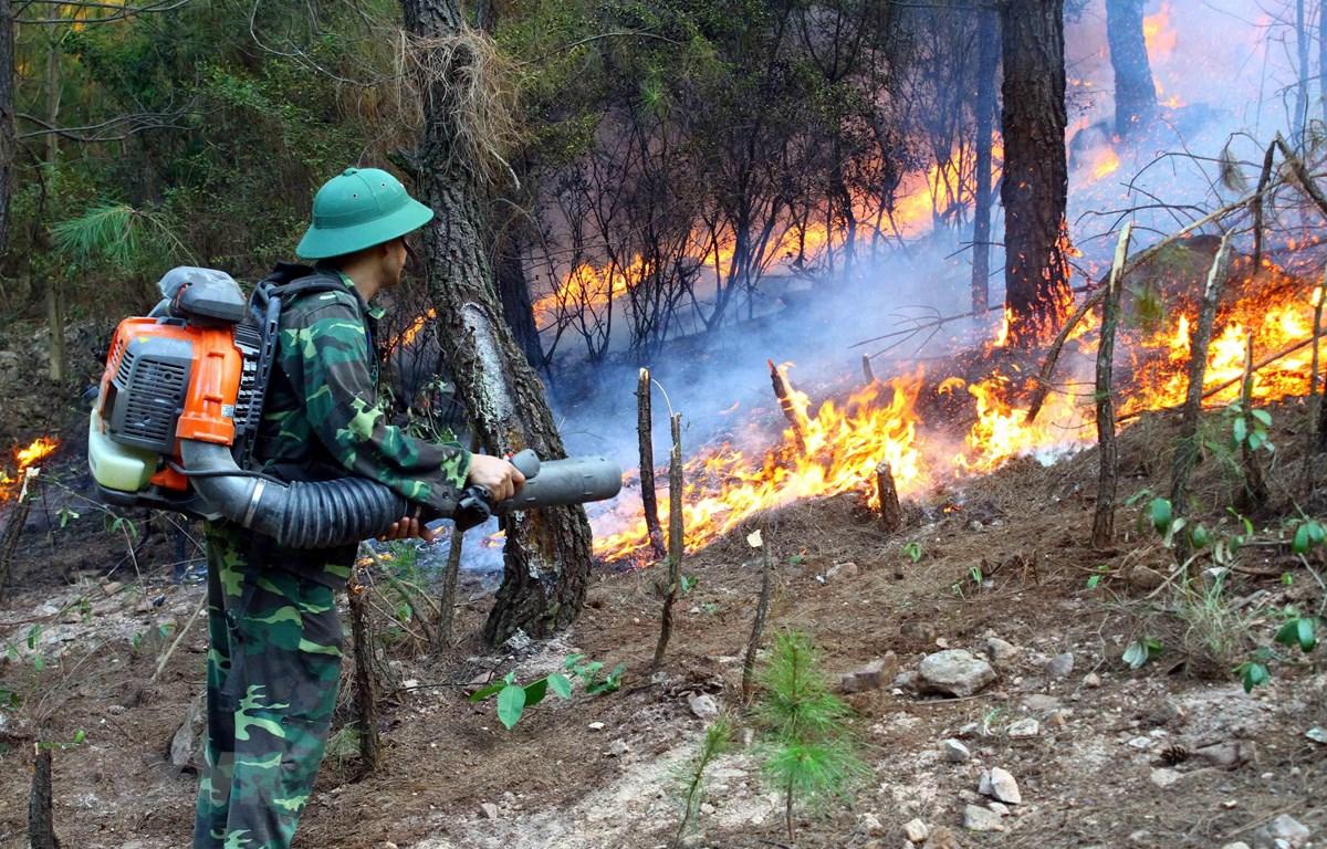 Các lực lượng chức năng nỗ lực dập lửa tại xã Diễn Lợi, huyện Diễn Châu (Nghệ An). (Ảnh: Tá Chuyên/TTXVN)