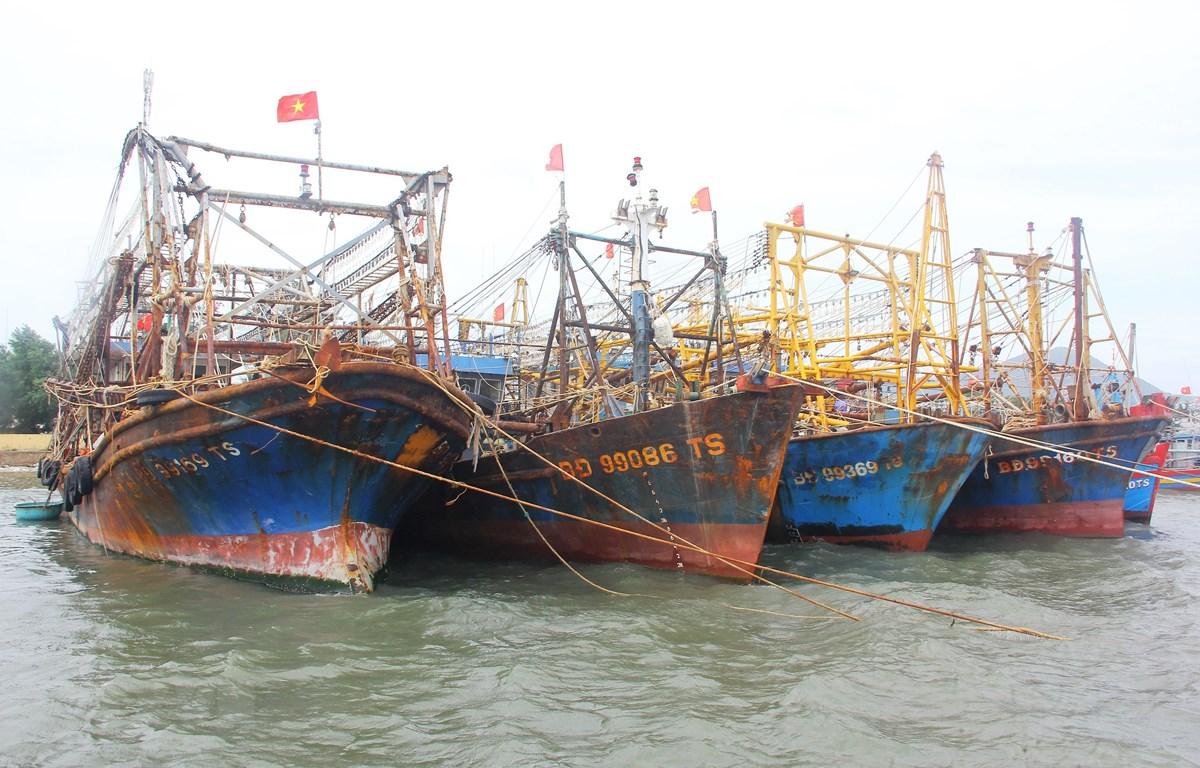 Tàu vỏ thép neo đậu tránh bão số 9 ở cảng cá Đề Gi, huyện Phù Cát. (Ảnh: Nguyên Linh/TTXVN)