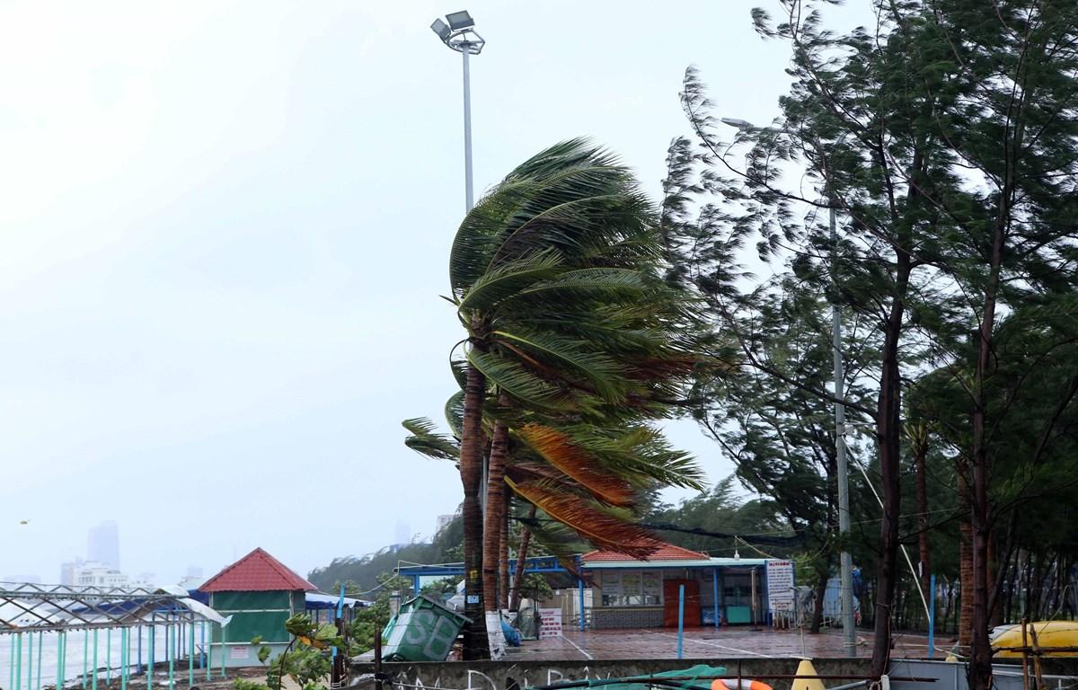 Gió lớn giật mạnh trên tuyến đường ven biển Nguyễn Tất Thành (Đà Nẵng) (sáng 28/10). (Ảnh: Trần Lê Lâm/TTXVN)