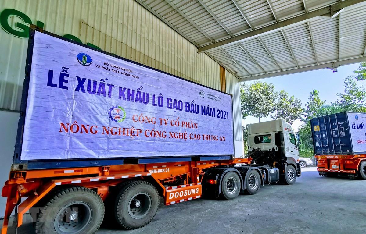 Xe chở lô hàng gạo xuất khẩu đầu năm 2021 của Công ty Cổ phần Nông nghiệp công nghệ cao Trung An chuẩn bị ra cảng. (Ảnh: Thanh Liêm/TTXVN)