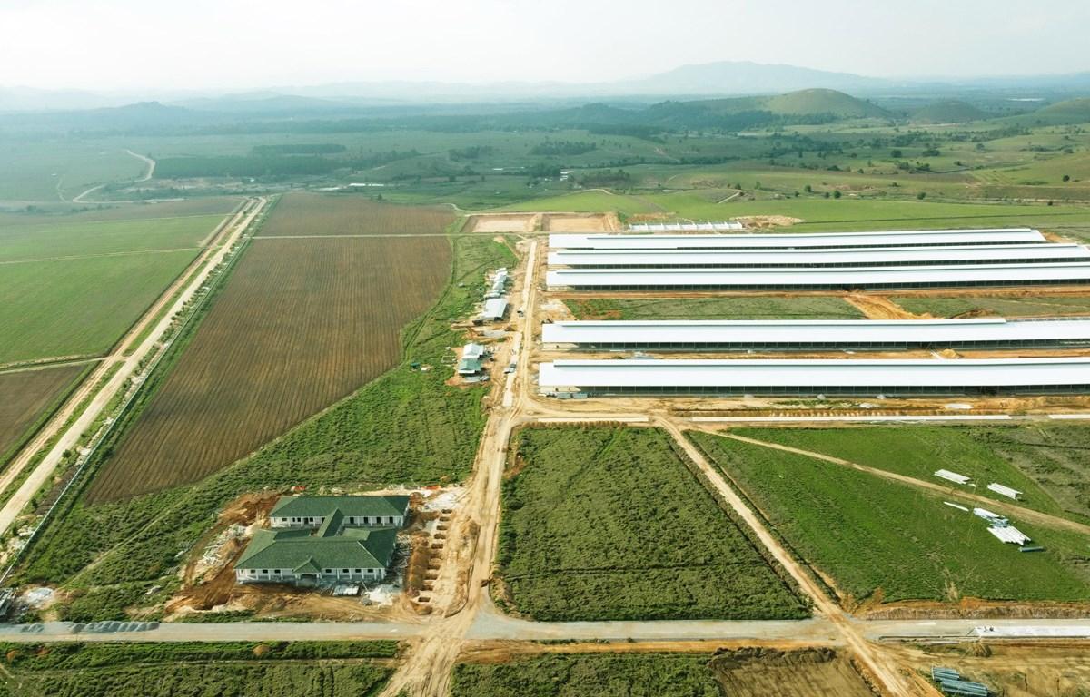 Trang trại đầu tiên trong Tổ hợp bò sữa Lao-Jagro tại Xiengkhuang của Vinamilk đã hoàn thành các hạng mục xây dựng cơ bản (ảnh chụp tháng 5/2021).
