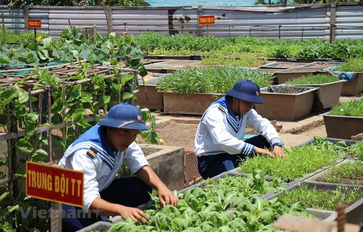 Sau thời gian thao luyện, các chiến sỹ tại Đảo An Bang lại chia nhau ra vườn bắt sâu, tưới nước cho rau. (Ảnh: H.V/Vietnam+)