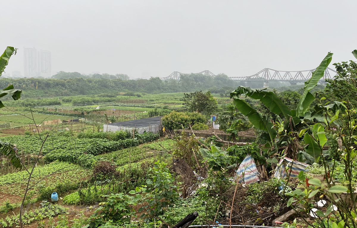 Người dân canh tác ven sông dọc khu Ngọc Thụy, quận Long Biên, Hà Nội. (Ảnh: Hùng Nguyên/Vietnam+)