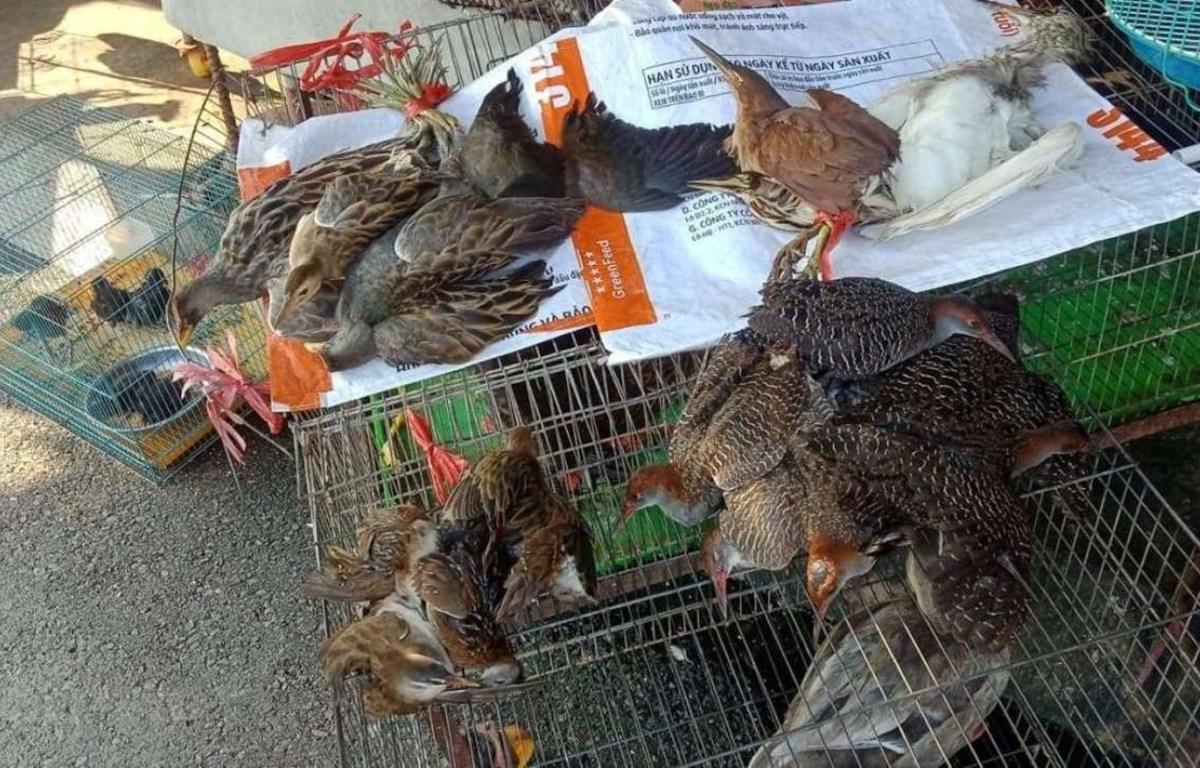 Các loài chim hoang dã được bày bán công khai tại chợ Thạnh Hóa, tỉnh Long An. (Ảnh: HV/Vietnam+)