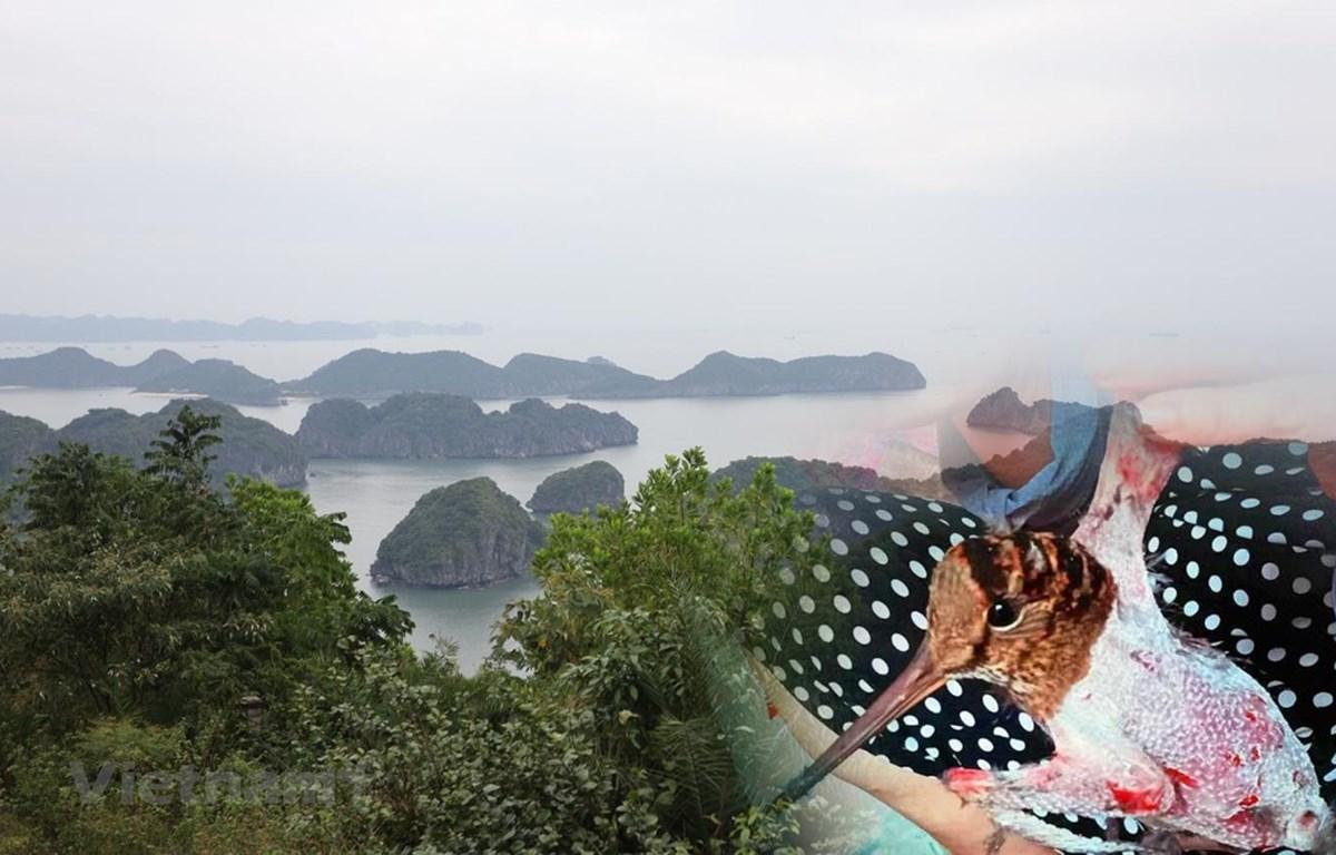 Đảo Cát Bà dần vắng bóng chim trời do vấn nạn bẫy bắt, giết hại chim hoang dã di cư suốt 20 năm qua. (Ảnh: PV/Vietnam+)