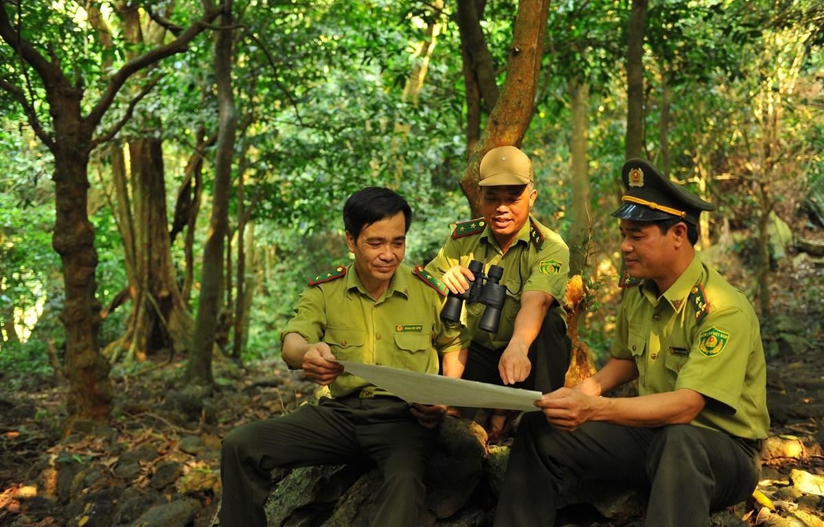 Các cán bộ Kiểm lâm Vườn quốc gia Cúc Phương tuần tra bảo vệ rừng. (Ảnh: Minh Đức/TTXVN)
