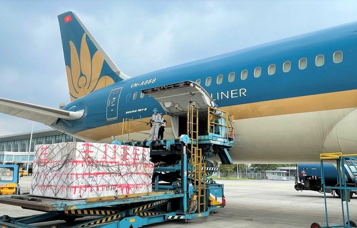 Máy bay của hãng hàng không Vietnam Airline vận chuyển hàng hóa sang các nước châu Âu. (Ảnh: CTV/Vietnam+)