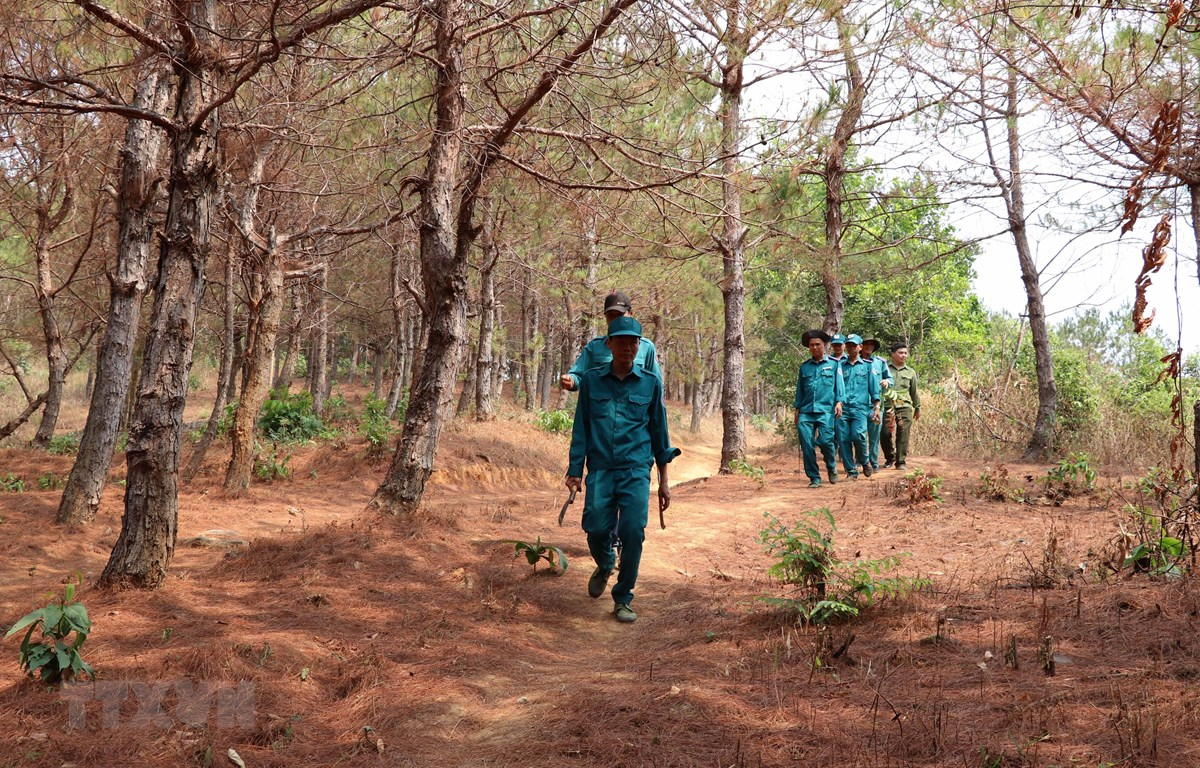 Lực lượng kiểm lâm, Ban quản lý rừng đi tuần tra rừng trong mùa khô hạn năm 2019. (Ảnh: Hồng Điệp/TTXVN)