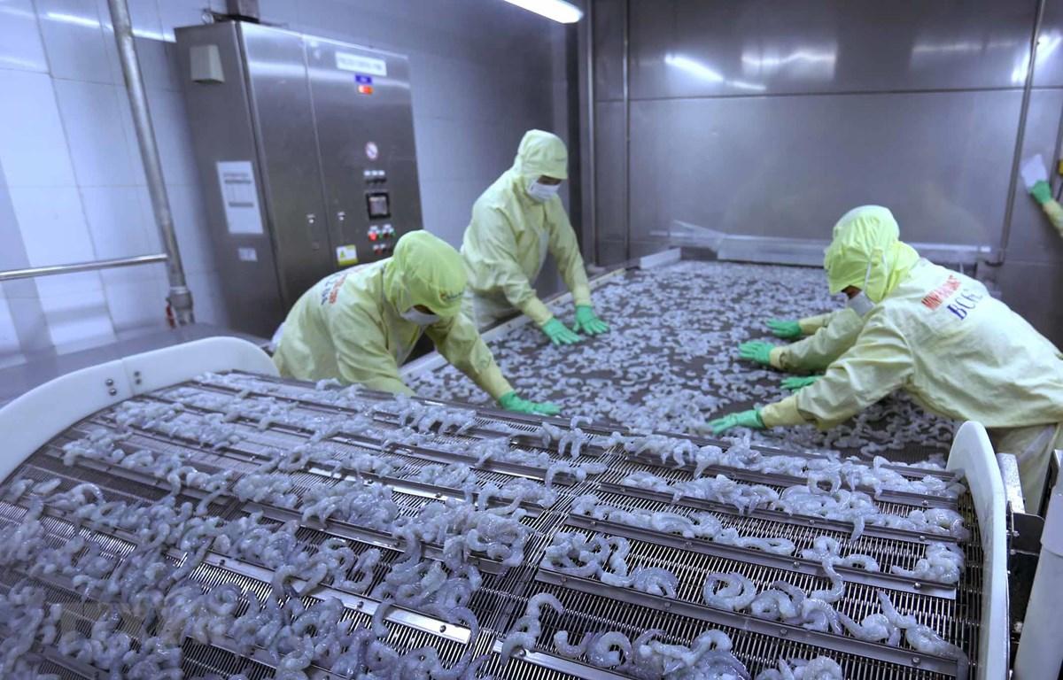 Cấp đông sản phẩm tôm xuất khẩu tại nhà máy của Công ty Cổ phần thủy sản Minh Phú Hậu Giang. (Ảnh: Vũ Sinh/TTXVN)