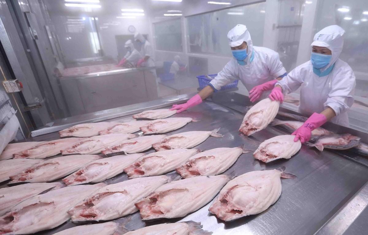 Chế biến cá tra xuất khẩu tại nhà máy của Công ty Cổ phần Đầu tư & Phát triển Đa Quốc Gia IDI (Tập đoàn Sao Mai). (Ảnh: Vũ Sinh/TTXVN)