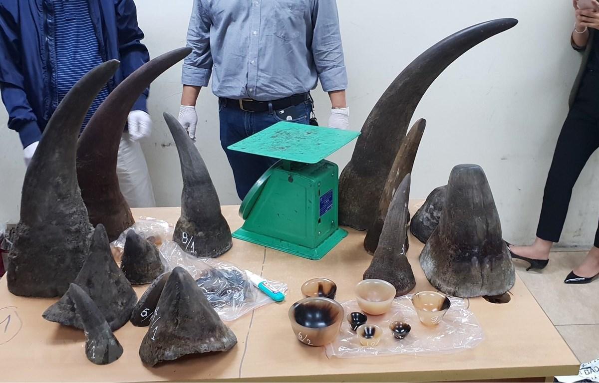 Tang vật sừng tê giác buôn bán trái phép bị lực lượng chức năng thu giữ. (Ảnh: TTXVN)