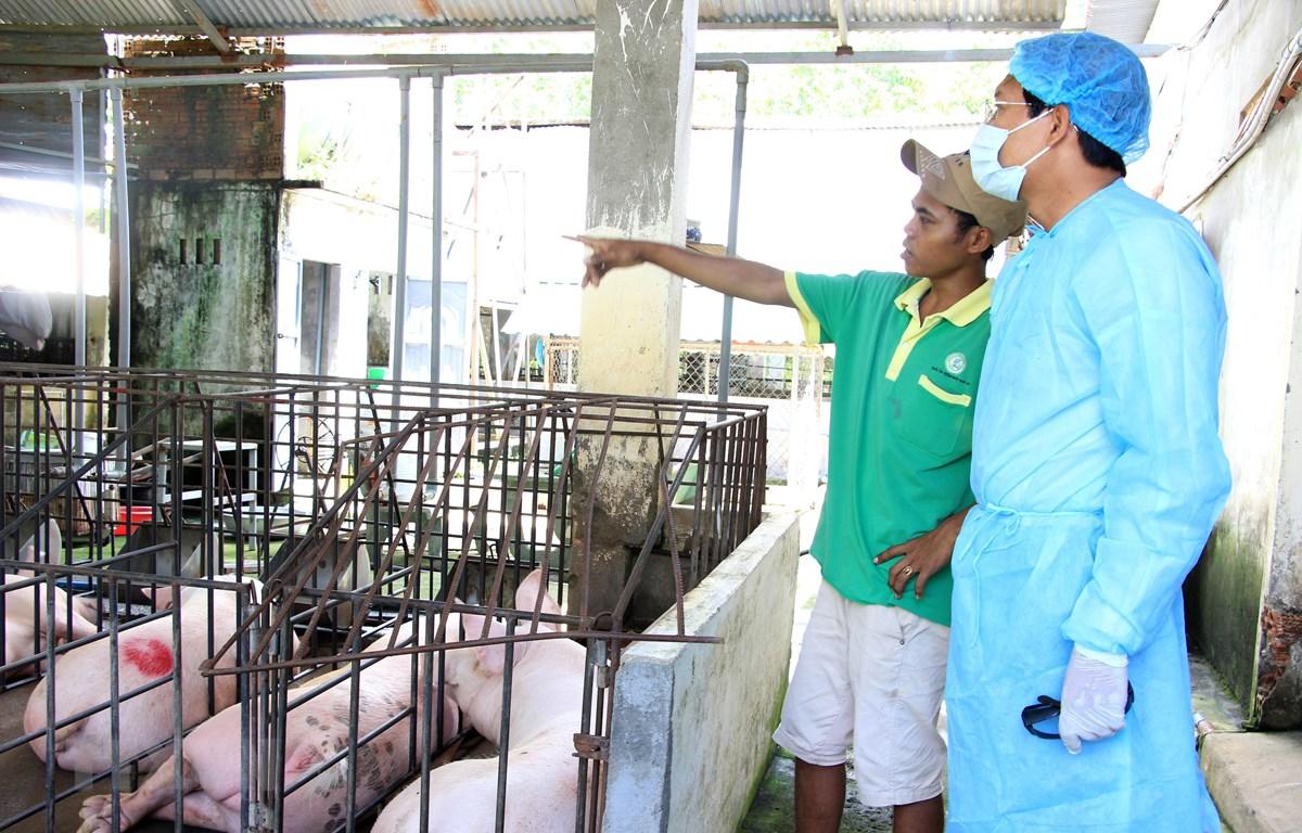 Phó Chủ tịch UBND kiểm tra tại ổ dịch xã Đức Chính, huyện Đức Linh. (Ảnh: Hồng Hiếu/TTXVN)
