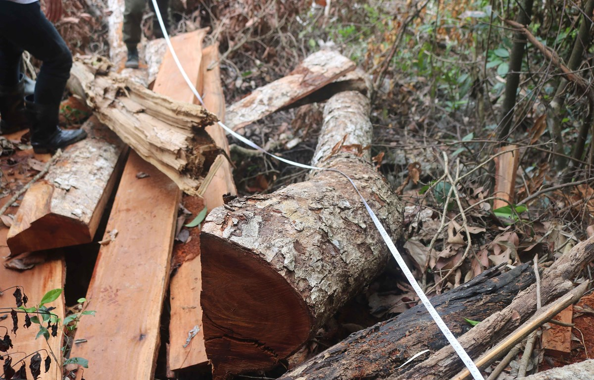 Kết quả hình ảnh cho cây gỗ  nghiến