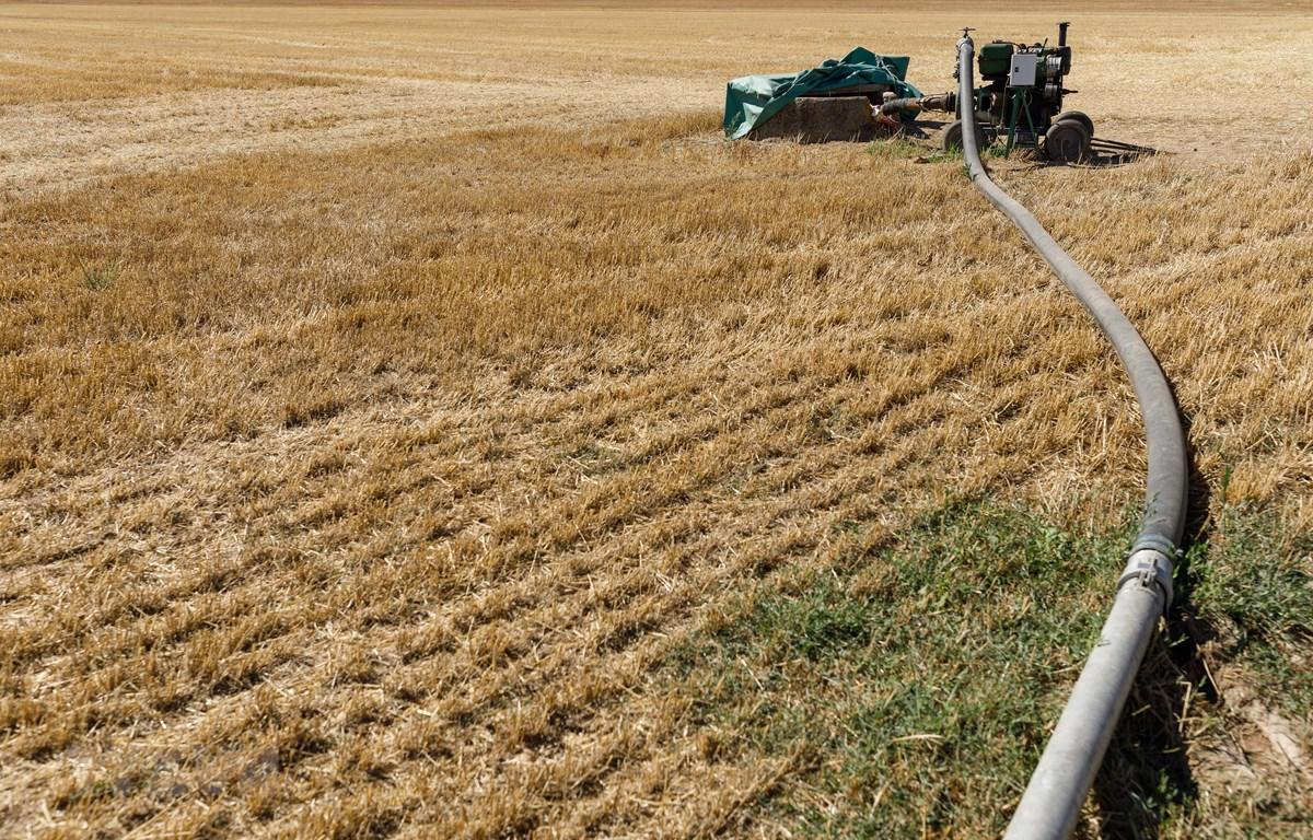 Bơm nước tưới cho một cánh đồng ở Pampliega, Tây Ban Nha. (Ảnh: AFP/TTXVN)