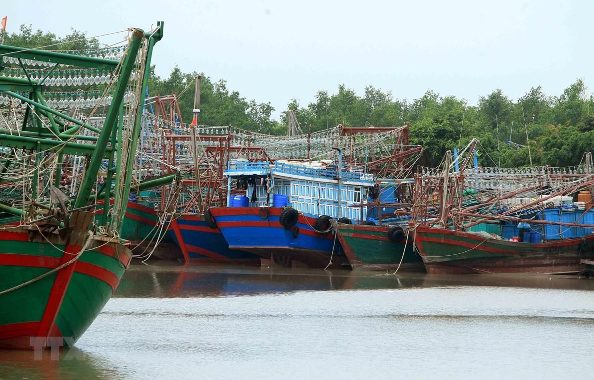 Các phương tiện tàu, thuyền về neo đậu tránh trú bão an toàn tại cảng cá Mắt Rồng, Hải Phòng. (Ảnh: An Đăng/TTXVN)