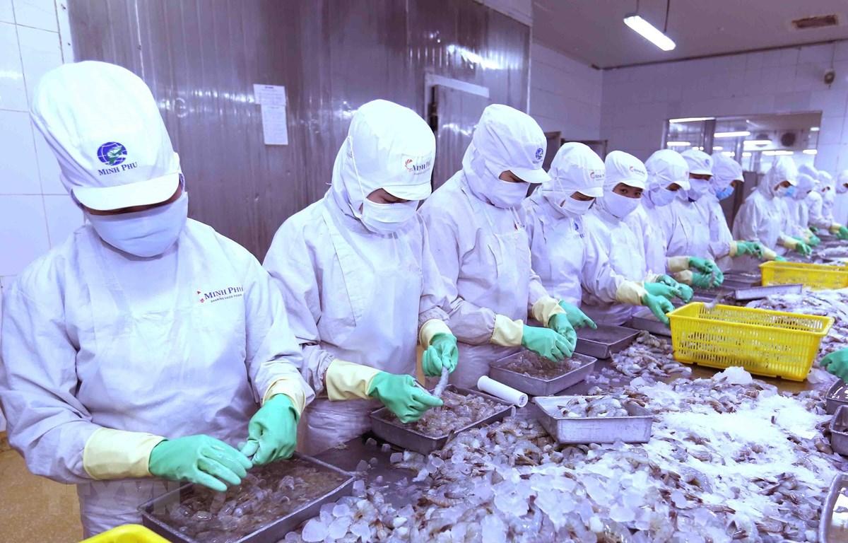 Phụ phẩm đầu và vỏ tôm sẽ được chế biến thành nguyên liệu, gia vị cho chế biến thực phẩm. (Ảnh: Vũ Sinh/TTXVN)