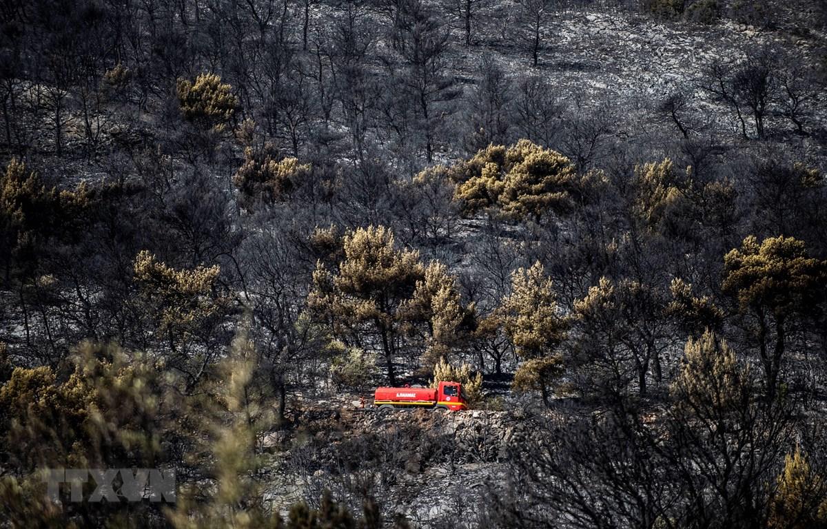 Cây cối bị thiêu rụi sau vụ cháy rừng ở ngoại ô thủ đô Athens, Hy Lạp ngày 12/8/2019. (Ảnh: AFP/TTXVN)