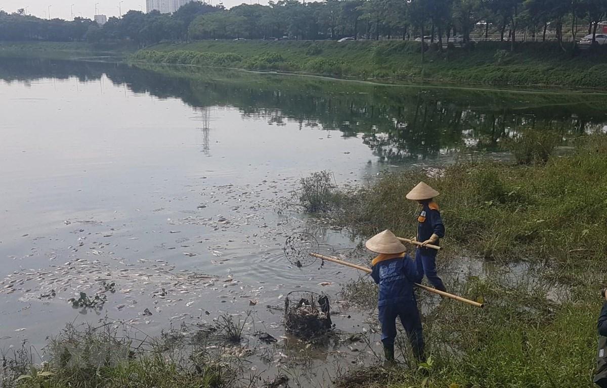 Công nhân Xí nghiệp quản lý cụm công trình đầu mối Yên Sở vớt cá chết để mang đi xử lý. (Ảnh Mạnh Khánh/TTXVN)
