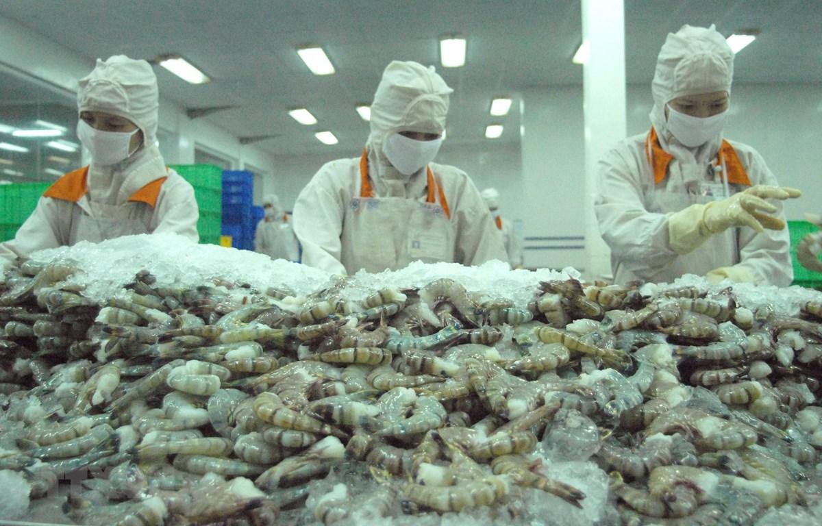 Chế biến tôm xuất khẩu tại công ty Cafatex - Hậu Giang. (Ảnh: TTXVN)