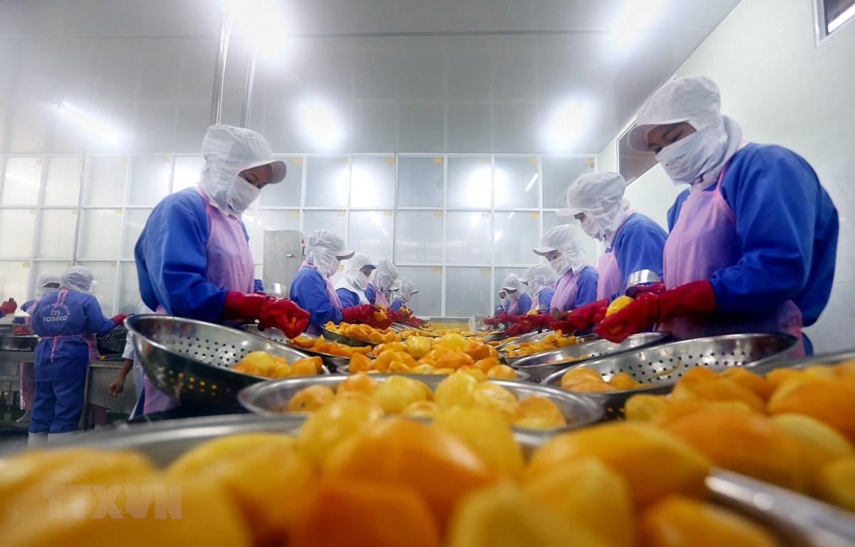 Dây chuyền chế biến trái cây xuất khẩu của Công ty Cổ phần Nafoods miền Nam. (Ảnh: Danh Lam/TTXVN)