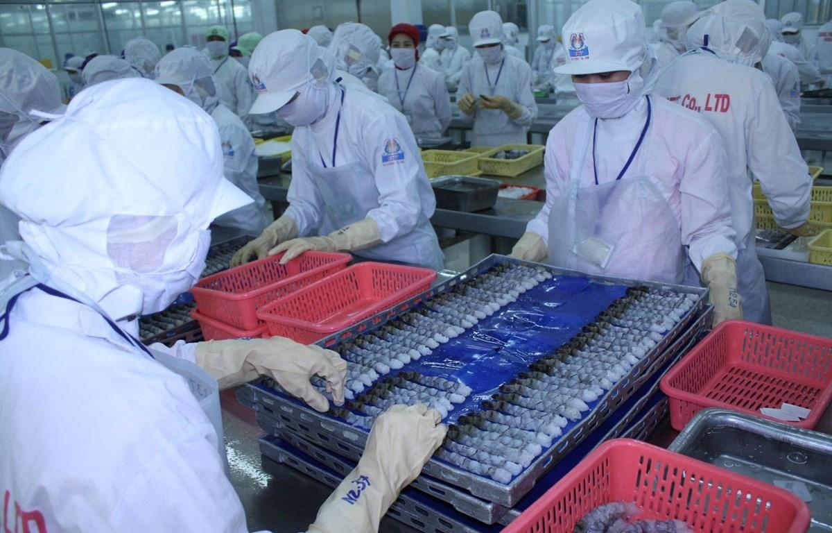 Chế biến tôm xuất khẩu tại Công ty TNHH kinh doanh chế biến Thủy sản xuất nhập khẩu Quốc Việt. (Ảnh: TTXVN)