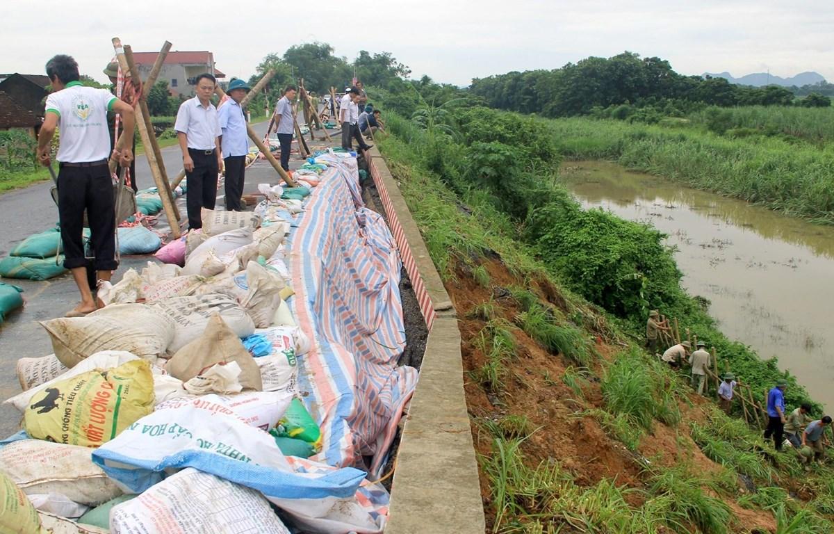 Các lực lượng gia cố tạm điểm sạt trên đê hữu sông Chu qua xã Thọ Hải, huyện Thọ Xuân. (Ảnh: Nguyễn Nam/TTXVN)