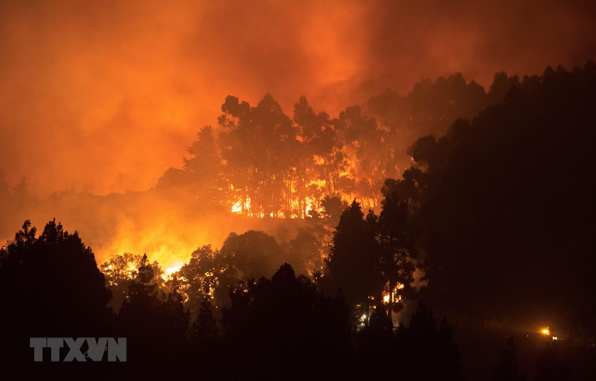 Ngày 17/8/2019 cũng đã xảy ra cháy rừng ở đảo Gran Canaria, Tây Ban Nha. (Ảnh: AFP/TTXVN)