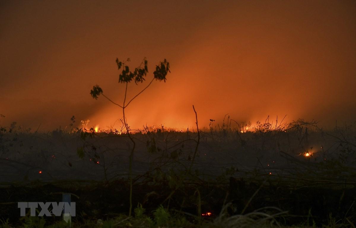 Lửa cháy ngùn ngụt tại một cánh rừng ở Kampar, tỉnh Riau, Indonesia ngày 9/9/2019. (Ảnh: AFP/TTXVN)