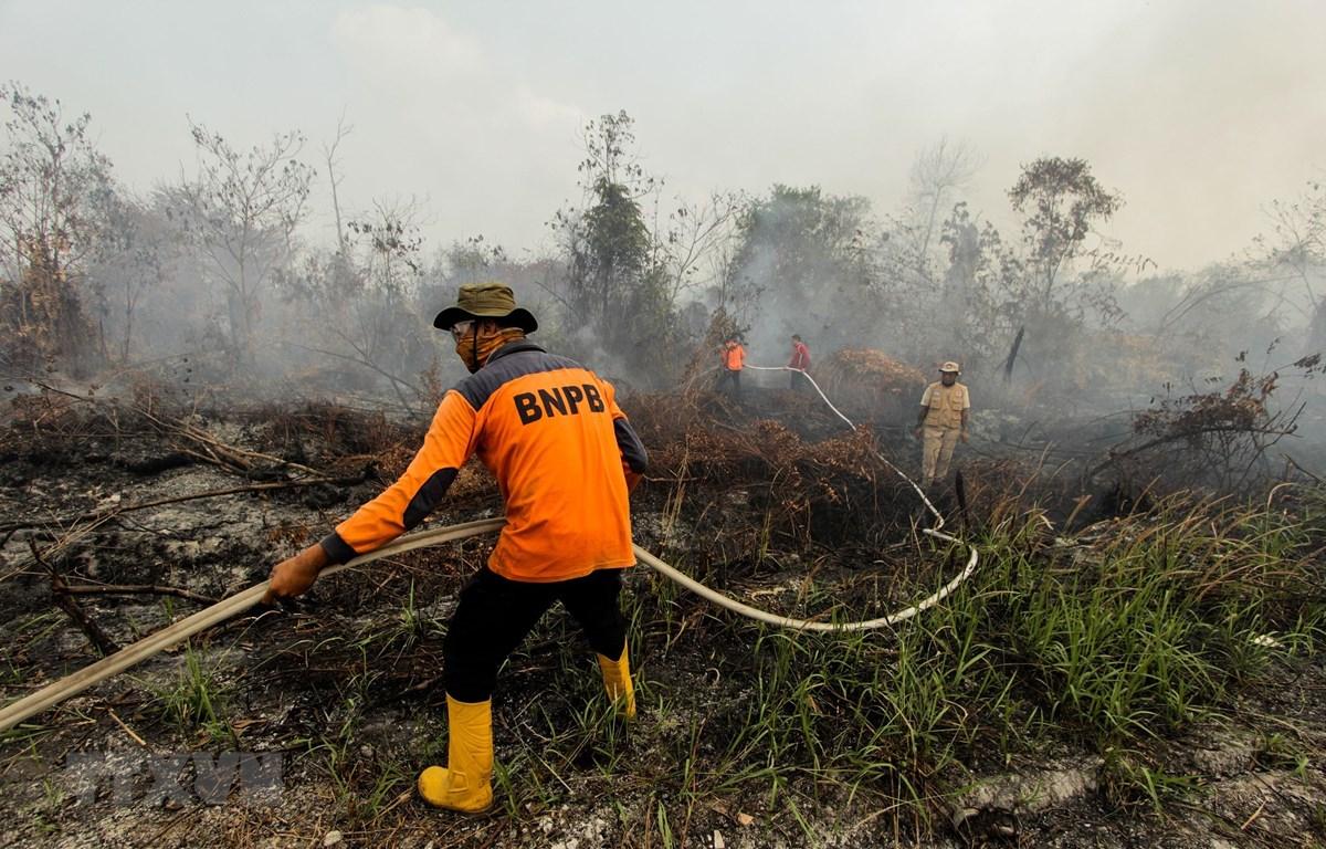 Lính cứu hỏa nỗ lực dập lửa cháy rừng tại Kampar, tỉnh Riau, Indonesia ngày 14/8/2019. (Ảnh: THX/TTXVN)