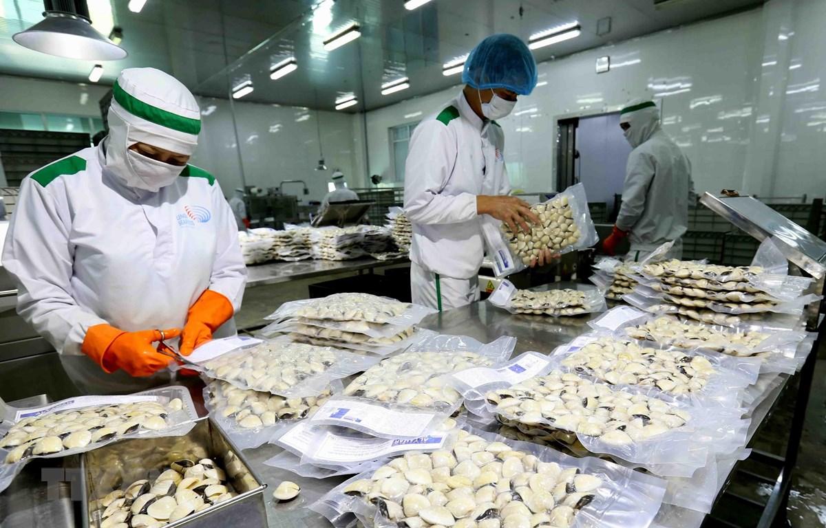 Đóng gói sản phẩm ngao nguyên con đông lạnh tại nhà máy của Công ty Thủy sản Lenger Việt Nam. (Ảnh: Vũ Sinh/TTXVN)