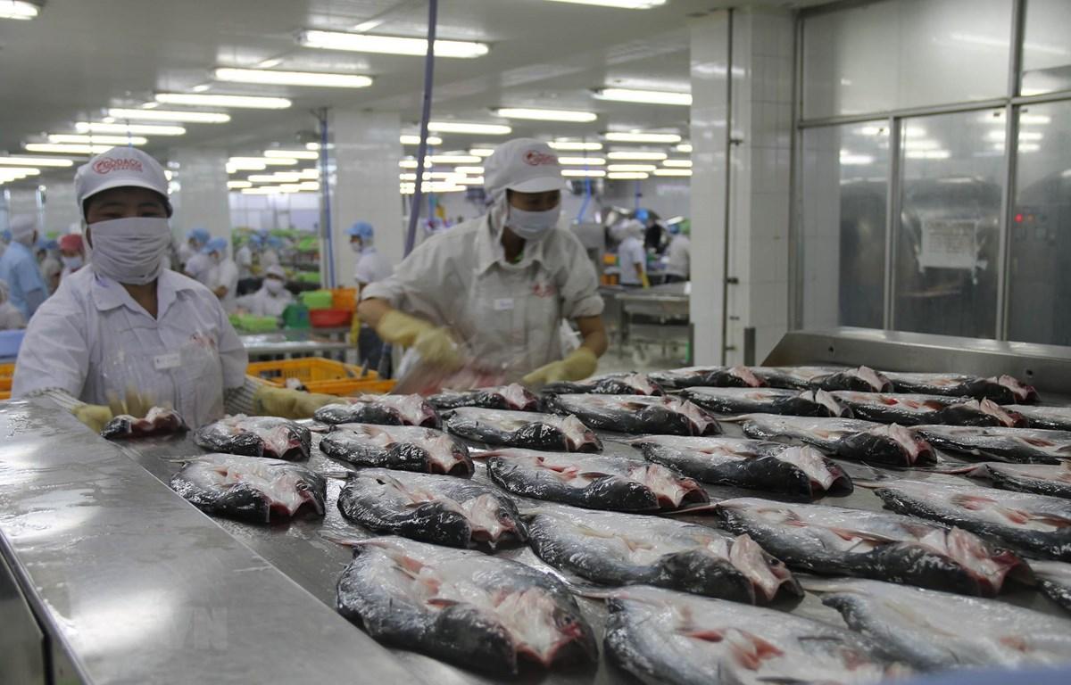 Chế biến cá da trơn xuất khẩu ở Công ty Cổ phần Gò Đàng Khu Công nghiệp Mỹ Tho, Tiền Giang. (Ảnh: Minh Trí - TTXVN)