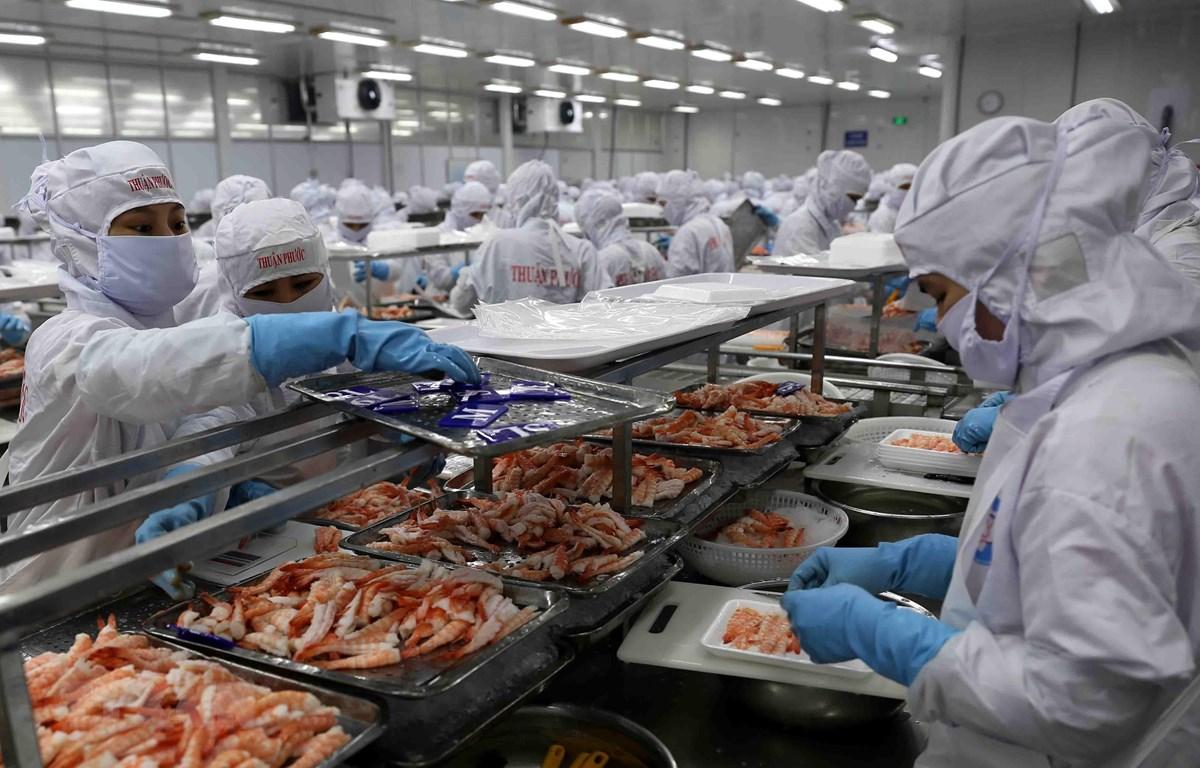 Dây chuyền chế biến tôm đông lạnh xuất khẩu của Công ty Cổ phần Chế biến thủy sản xuất khẩu Thuận Phước. (Ảnh: Vũ Sinh/TTXVN)