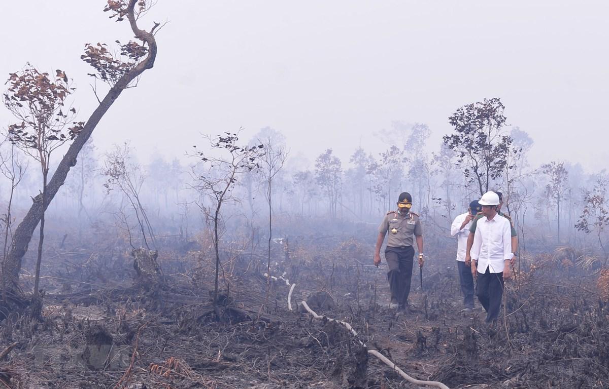 Tổng thống Indonesia Joko Widodo (phải) thị sát khu vực xảy ra cháy rừng ở Nam Sumatra ngày 6/9. (Ảnh: AFP/TTXVN)