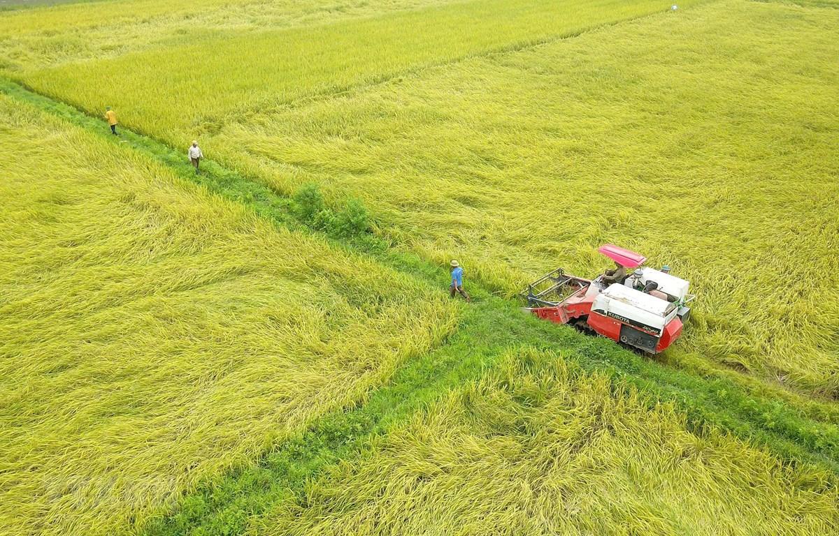 Thu hoạch lúa tại huyện Hoa Lư, Ninh Bình. (Ảnh: Minh Đức/TTXVN)
