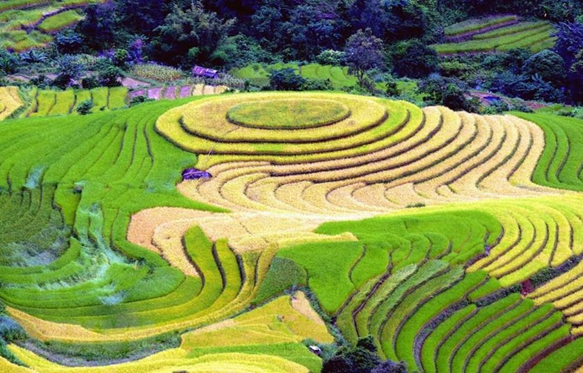 Ruộng bậc thang tại xã Xím Vàng, huyện Bắc Yên (Sơn La). (Ảnh: Quang Quyết/TTXVN)