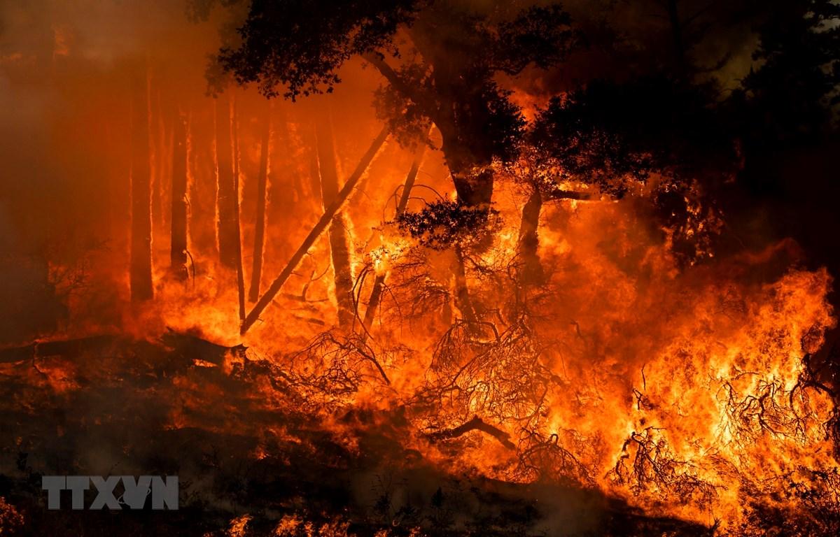 Lửa bốc dữ dội trong trận cháy rừng ở bang California, Mỹ ngày 27/7/2019. (Ảnh: AFP/TTXVN)