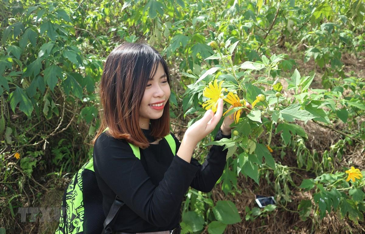 Nhiều bạn trẻ ở các tỉnh thành lân cận Hà Nội cũng tìm đến Ba Vì để ngắm hoa dã quỳ nở. (Ảnh: Mạnh Khánh/TTXVN)
