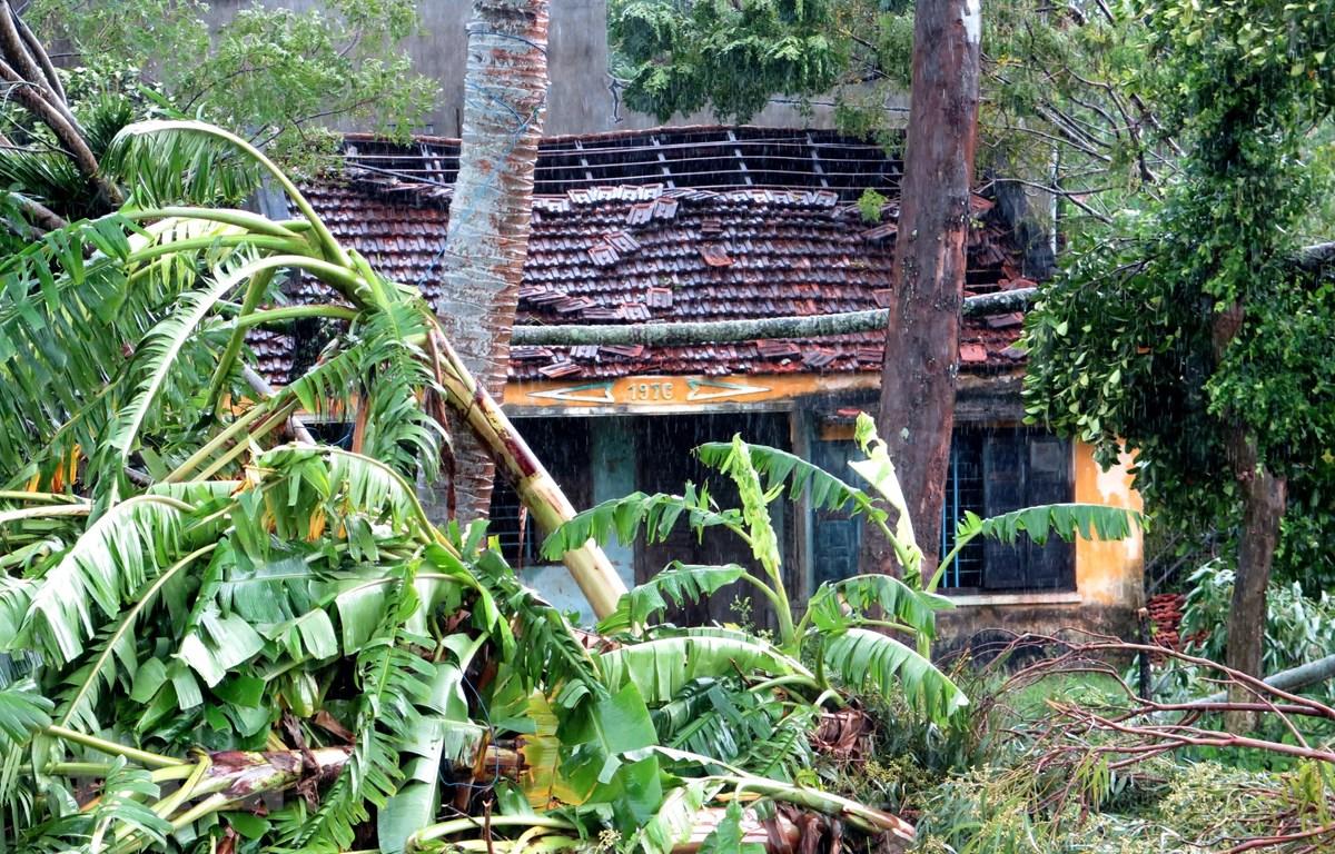Nhiều nhà dân bị tốc mái, cây cối ngã đổ. (Ảnh minh họa: Phước Ngọc/TTXVN)